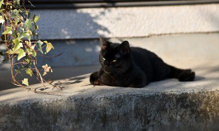 """ต้อนรับวันแมวโลก มารู้จักเจ้าเหมียว """" จิบิ """" แมวดำขี้น้อยใจ ที่จะมาเรียกน้ำตาผู้ชมใน Only The Cat Knows  เจ้าเหมียว """"จิบิ """" หายไปไหนนะ"""